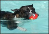 Using a toy that floats will help encourge play time.